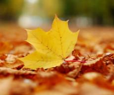 秋天唯美意境风景图片  秋天的美是成熟的