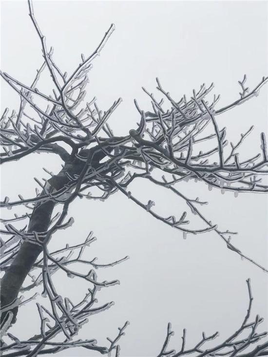 张家界雾凇奇观  网友感叹:这就是冬天的感觉啊